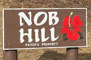 Browse active condo listings in NOB HILL